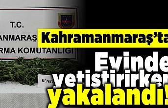 Kahramanmaraş'ta evinde yetiştirirken yakalandı!