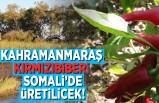 Kahramanmaraş kırmızıbiberi Somali'de üretilecek!