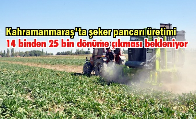 Kahramanmaraş'ta şeker pancarı üretimi