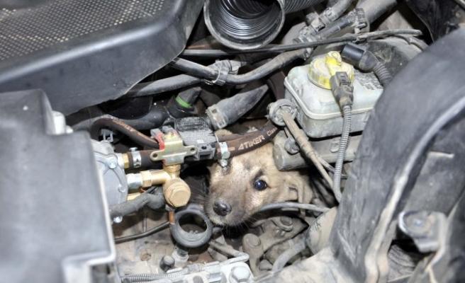 Kahramanmaraş'ta köpek kurtarma operasyonu