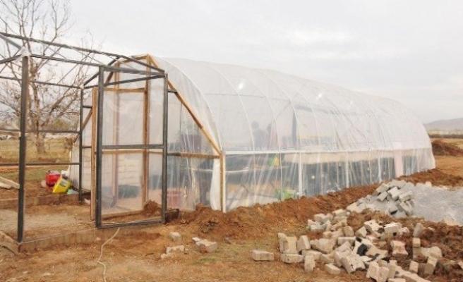 Afşin Belediyesi sera kurup çiçek üretiyor