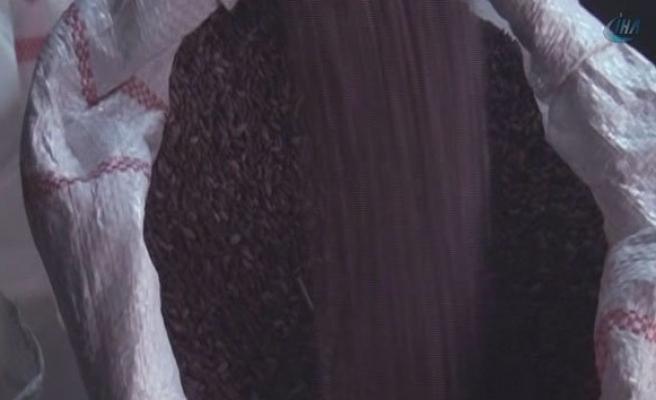 Kahramanmaraş'ta 'Yasaklı Pirinç' Üretiliyor