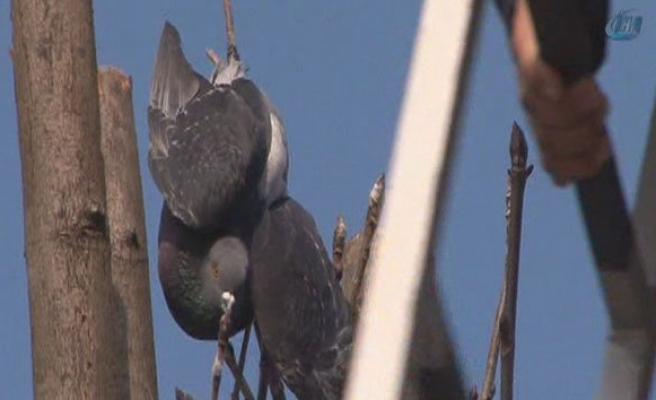 Mahsur kalan güvercinin imdadına itfaiye yetişti!