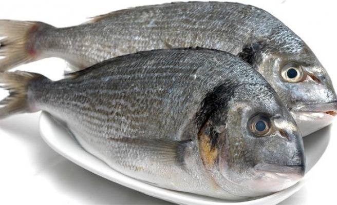 Türk balıkları dünya sofralarına uçuyor!