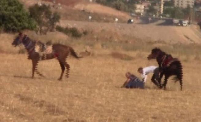 Atlar çarpıştı, biniciler ölümden döndü