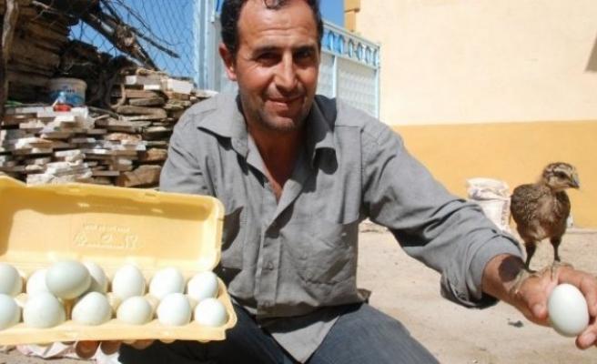 Bu yumurtaların tanesi 10 lira!