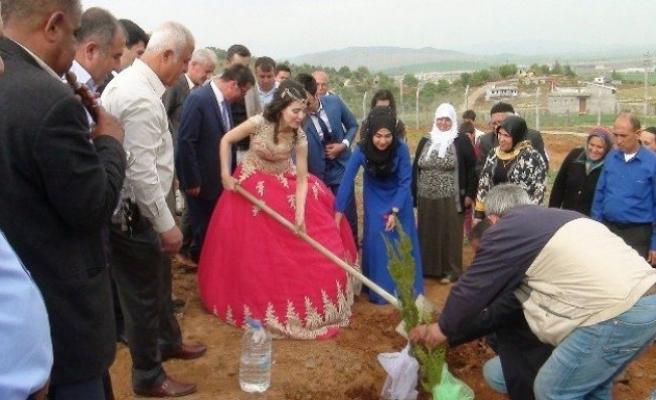 Yeni evlenen çift davul zurnayla fidan dikti