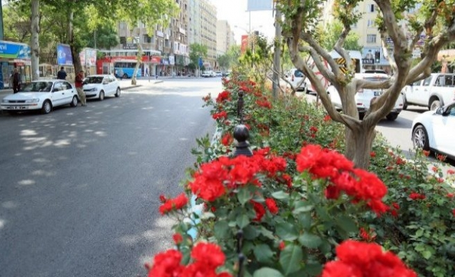 Kahramanmaraş'ta yollar çiçek açtı