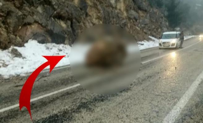 Kahramanmaraş'ta sürücüler gözlerine inanamadı!