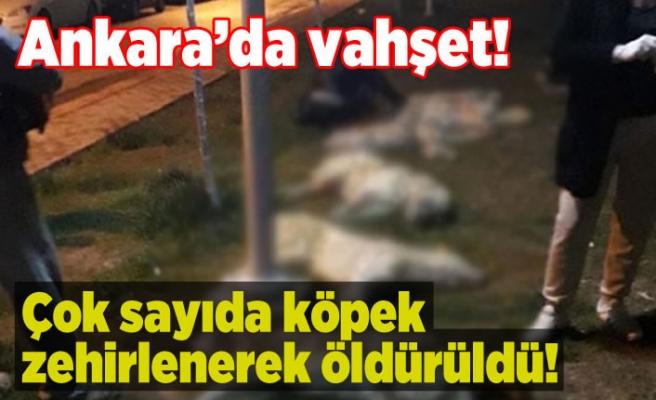 Ankara'da masumlara yapılan insanlık dışı vahşet!