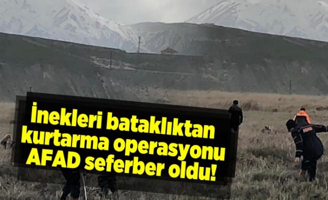 İnekleri bataklıktan kurtarma operasyonunda AFAD seferber oldu!