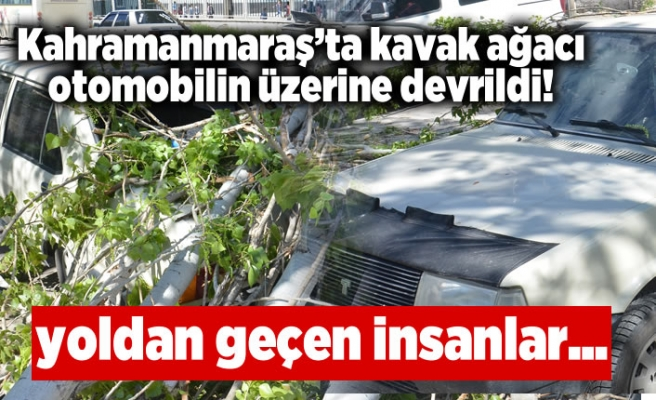 Kahramanmaraş'ta kaçak ağacı otomobilin üzerine devrildi!