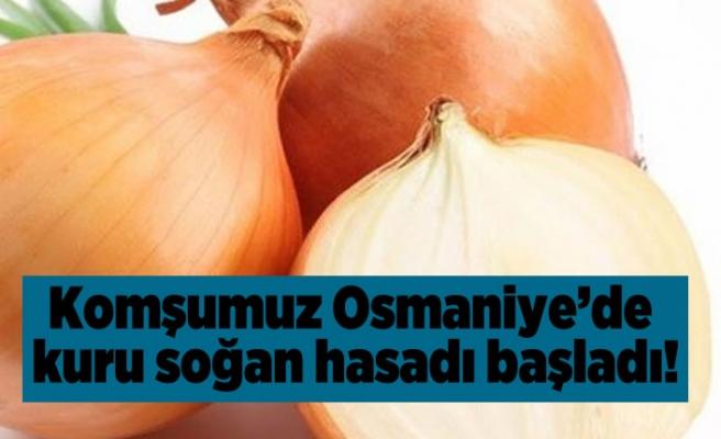 Komşumuz Osmaniye'de kuru soğan hasadı başladı!