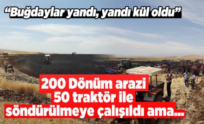 200 dönümlük ekin arazisi yandı, kül oldu!