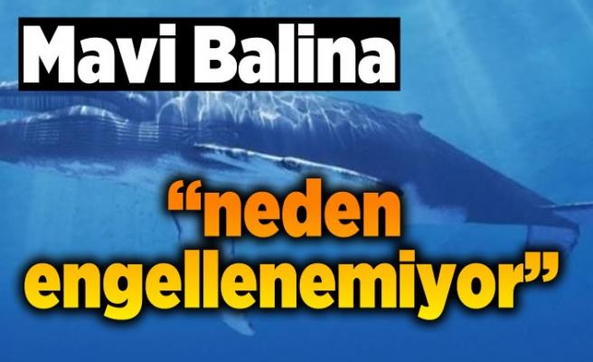 Mavi Balina ''neden engellenemiyor''