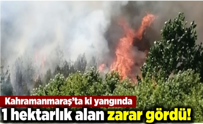 Kahramanmaraş'ta ki yangında 1 hektarlık alan zarar gördü!