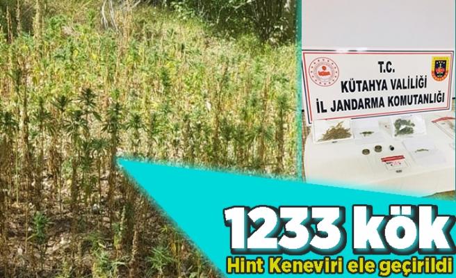 1233 kök Hint keneviri ele geçirildi