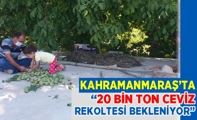 Kahramanmaraş'ta 20 bin ton ceviz rekoltesi bekleniyor!
