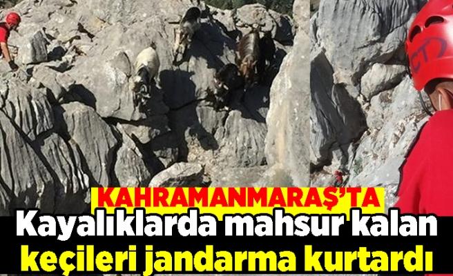 Kahramanmaraş'ta kayalıklarda mahsur kalan keçileri jandarma kurtardı
