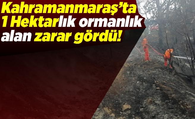 Kahramanmaraş'ta 1 hektar ormanlık alan zarar gördü!