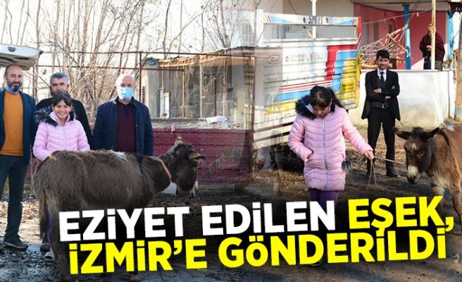 Eziyet edilen eşek, İzmir'e gönderildi
