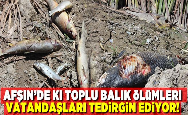 AFŞİN'DE Kİ TOPLU BALIK ÖLÜMLERİ VATANDAŞLARI TEDİRGİN EDİYOR!