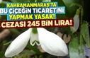 Kahramanmaraş'ta bu çiçeğin ticaretini yapmak...