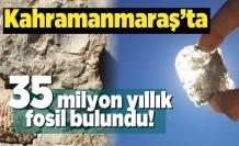 Kahramanmaraş'ta 35 milyon yıllık fosil bulundu!