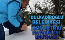 Dulkadiroğlu Belediyesi soğuktaki hayvanları unutmadı!