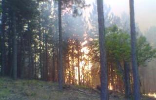 Çağlayancerit'te orman yangını!