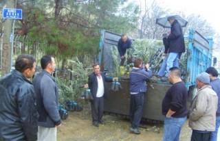 Türkoğlu'nda çiftçilere 55 bin zeytin fidanı