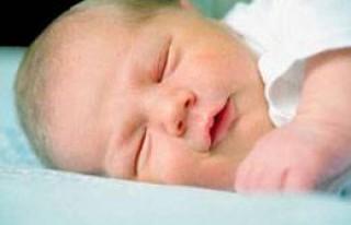 Bir kerede 8 bebek doğurdu!