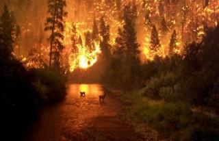 Orman yangınları için sınır ötesi toplantı