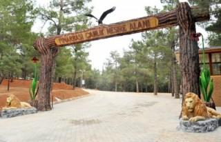 Pınarbaşı Çamlık Mesire Alanı hizmete açıldı