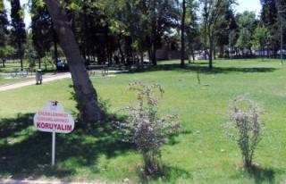 Park ve Bahçe ihalesi sözleşmesi KİK'in sitesinde'