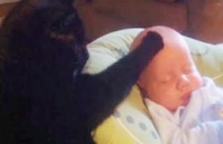 Bakıcı kedi, bebek uyutuyor..