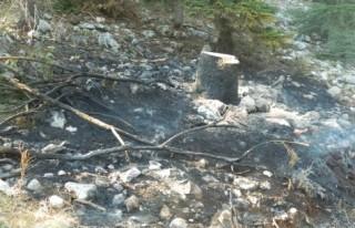 Andırın'daki orman yangını 11 gündür sürüyor!..