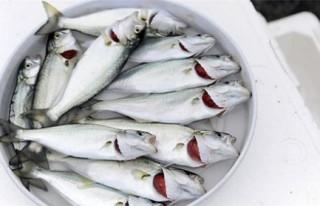 Balıklar, sayısız hastalığa şifa oluyor..