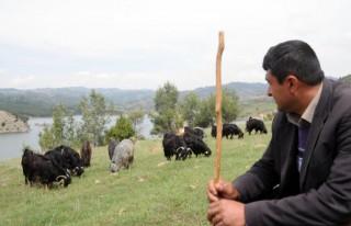 Çoban istihdamı desteği yetiştircileri umutlandırdı