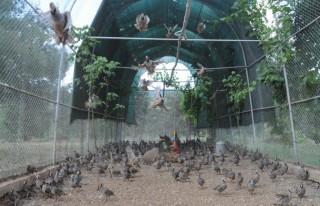 Türkiye'nin ilk Kınalı Keklik merkezi