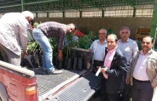 Elbistan'da 135 Üreticiye 10 Bin Fidan Dağıtıldı