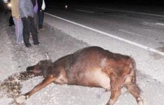 İneğe çarpan otomobilin sürücüsü yaralandı,...