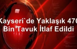 Kayseri'de yaklaşık 470 bin tavuk itlaf edildi!