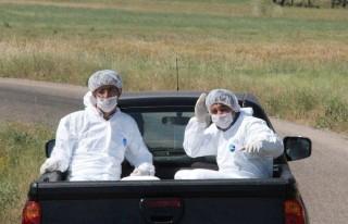 Yabani Hayvanlar Kuduza Karşı Aşılandı