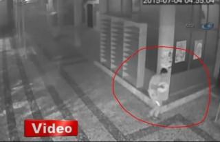 Fıstık hırsızlığı güvenlik kamerasında!