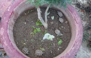 Antalya'da 'kaçak kaplumbağa' operasyonu!