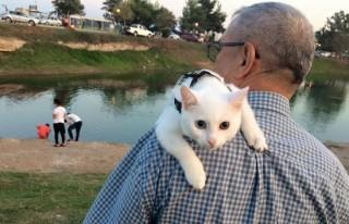 Kayıp van kedisini Facebook'ta arıyor!