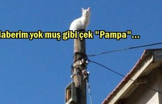 Belediyemiz 'Kedi' kurtardı(!)