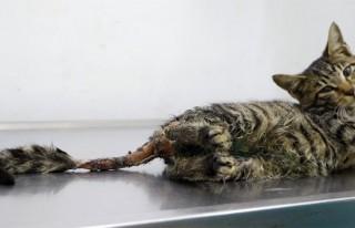 Bu iğrençliğin adı yok! Kediye tecavüz ve işkence!