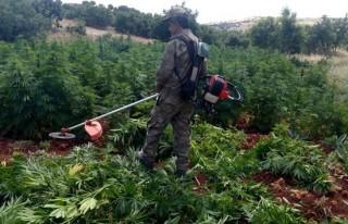 İşte PKK'nın yıllık uyuşturucu geliri!